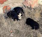Красивые щенки от средней собаки